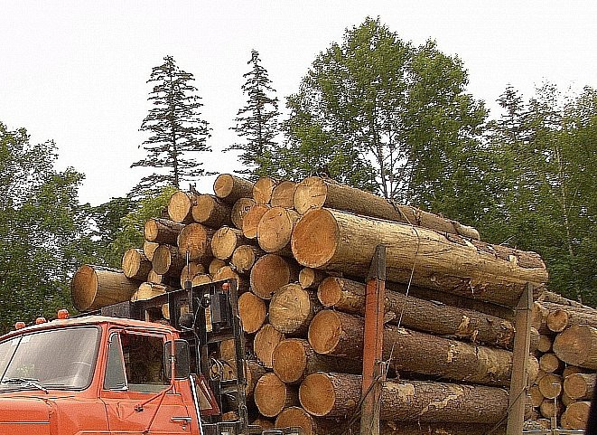 Лесовоз рухнул с моста в Приморье