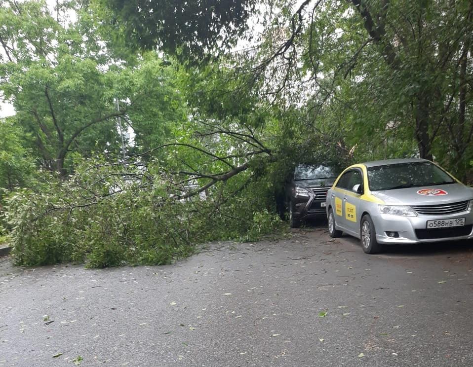 Первый пошёл:  штормовой ветер валит деревья на машины в Приморье
