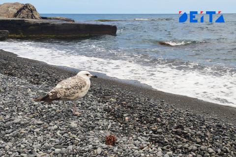 Стала известна причина массовой гибели птиц в Приморье