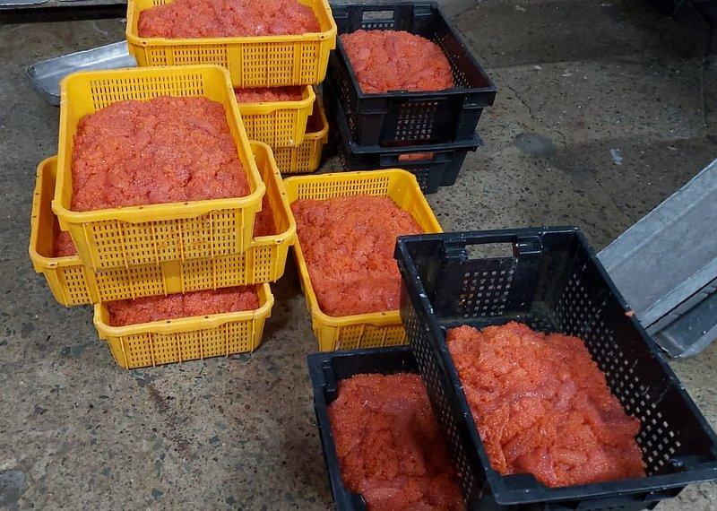 Браконьер выпотрошил красной икры на 6 миллионов на Камчатке