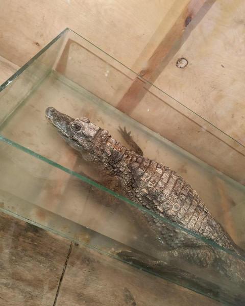 Грустные крокодилы возмутили приморских зоозащитников