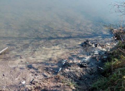 Второй случай массовой гибели рыб подтверждён в Артёме