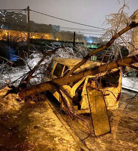 Что делать, если на авто упало дерево? Советы юриста
