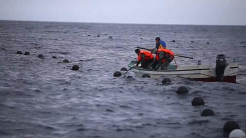 Шхуну с людьми прибило к берегам Японии