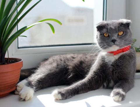 Безумную картинку с котом обсуждают в соцсетях