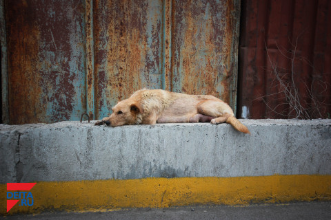 «В Приморье люди живут плохо, животные – еще хуже»: как спасают бездомных собак и кошек