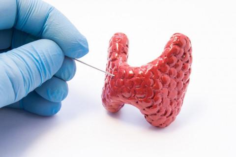 Лечение заболеваний щитовидной железы во Владивостоке