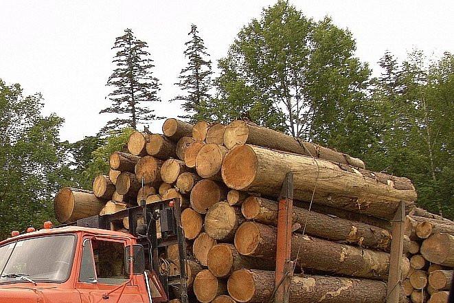 Дальневосточный лес будут раздавать в Интернете
