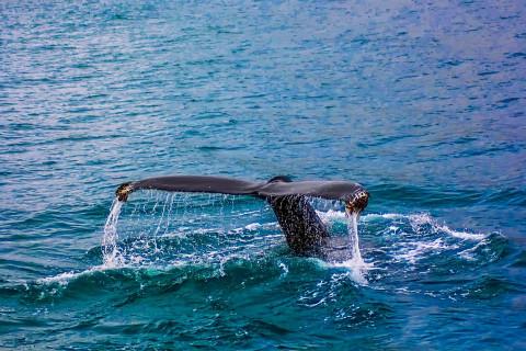 """Российские власти призывают объединиться в борьбе за свободу узников """"китовой тюрьмы"""""""