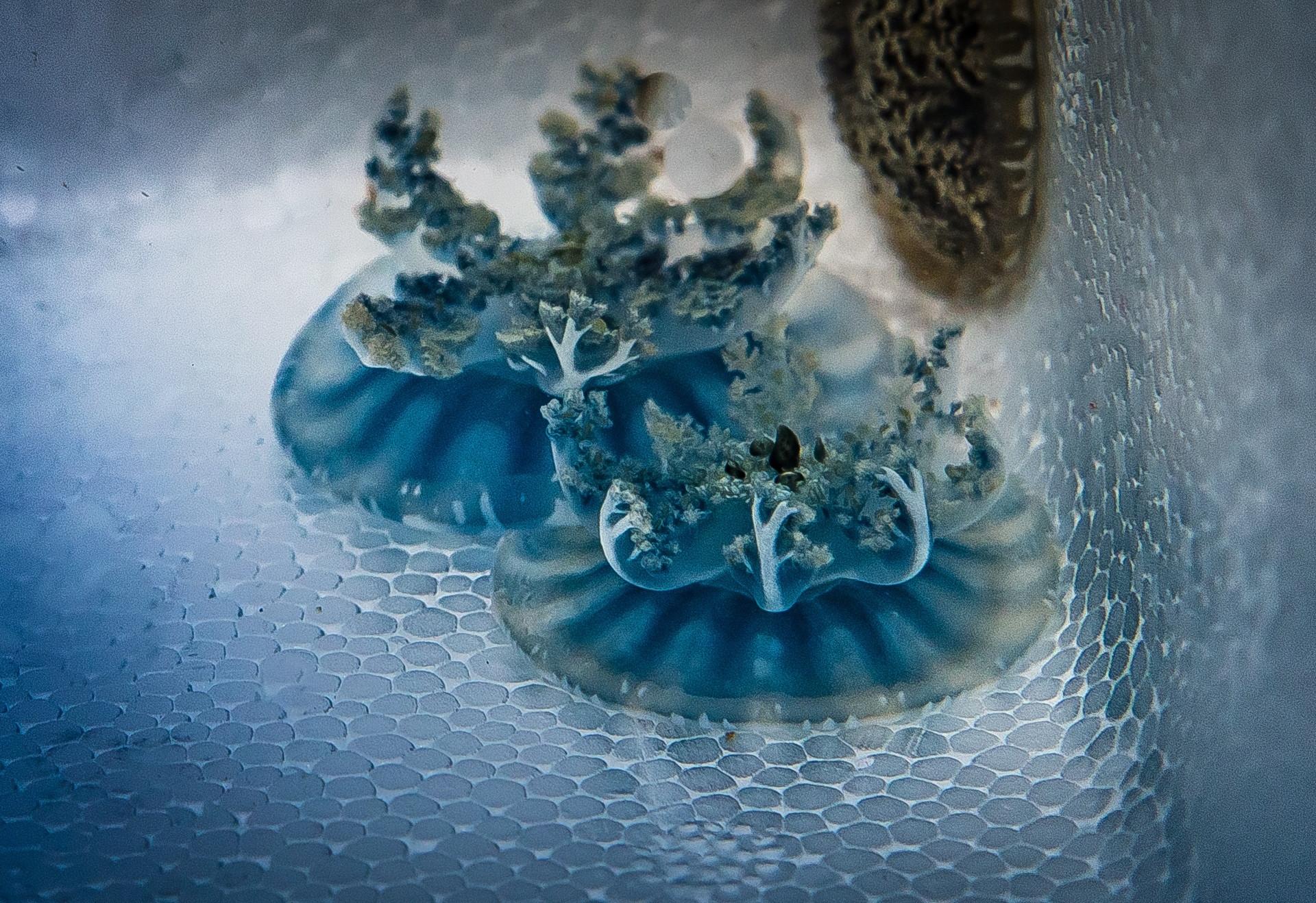 Морские черви и медузы помогут в лечении рака