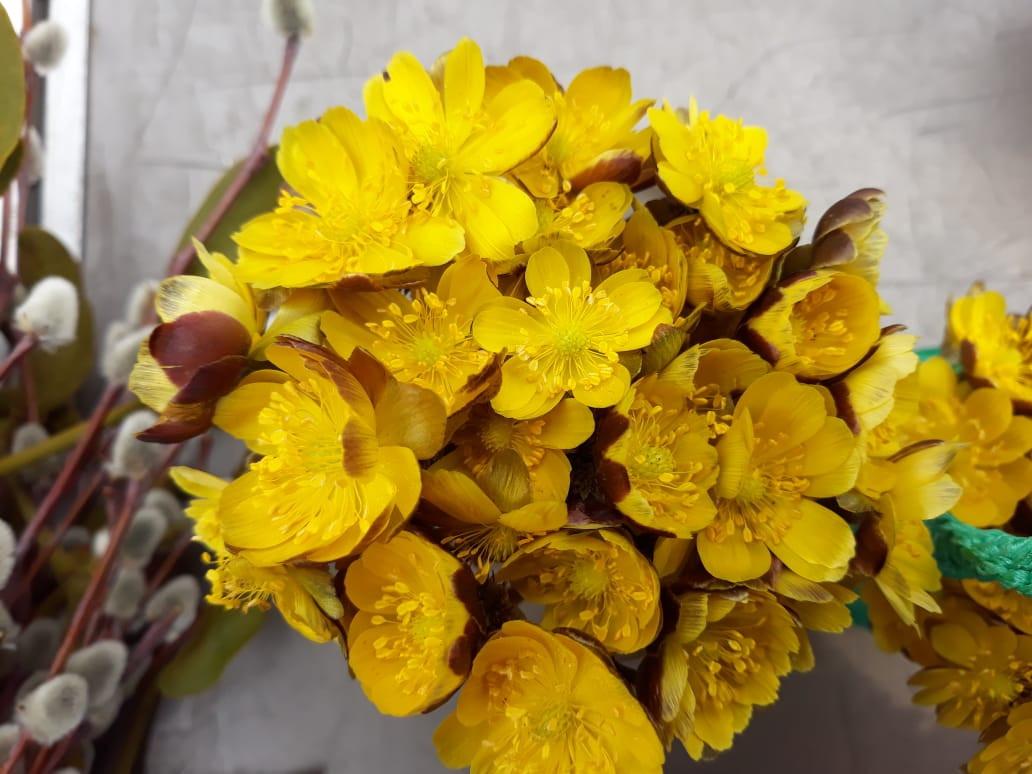 Весна в Приморье продается по 250 рублей