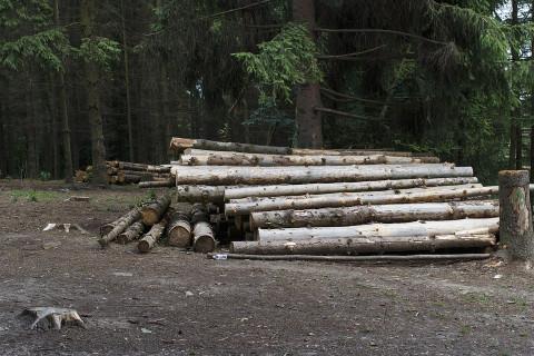 Русский лес уходит в Китай без счета и за бесценок