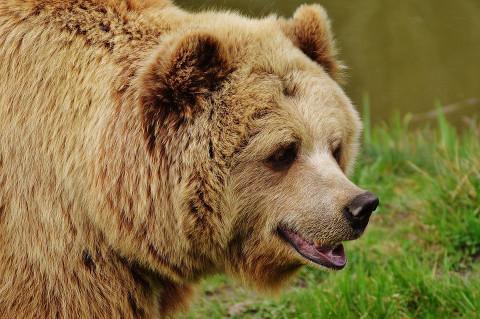 Медведь на российском заводе взорвал интернет