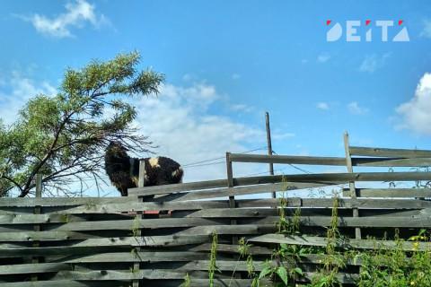 Власти поддержат аграриев Дальнего Востока рублем