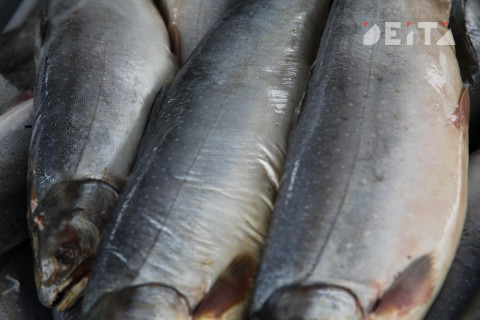 Российская рыба стала доступной в Сингапуре и Испании