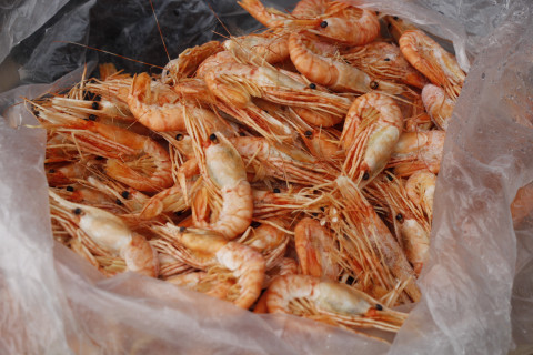 Приморские браконьеры добывают морепродукты тоннами