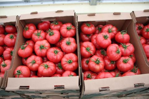 Импортные помидоры могут исчезнуть в России