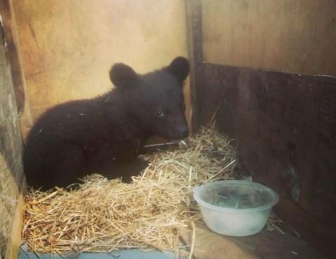 Медвежонка в коробке подкинули фермеру в Приморье