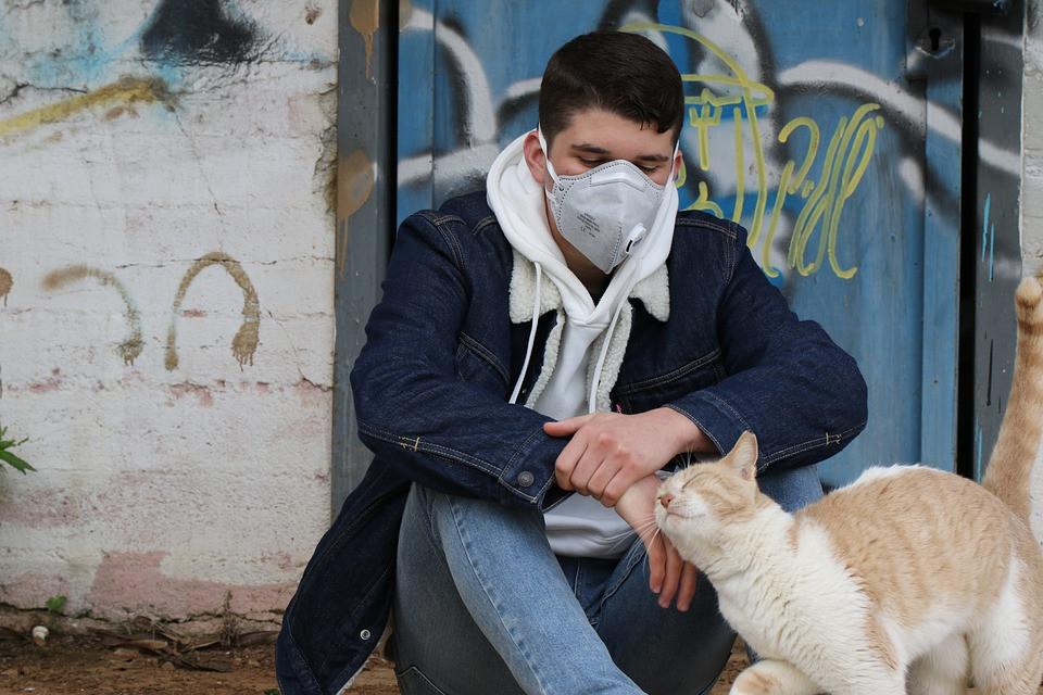 Кошка заболела коронавирусом в России