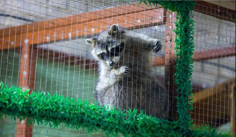 Уголовное дело возбуждено по факту брошенных в зоопарке животных