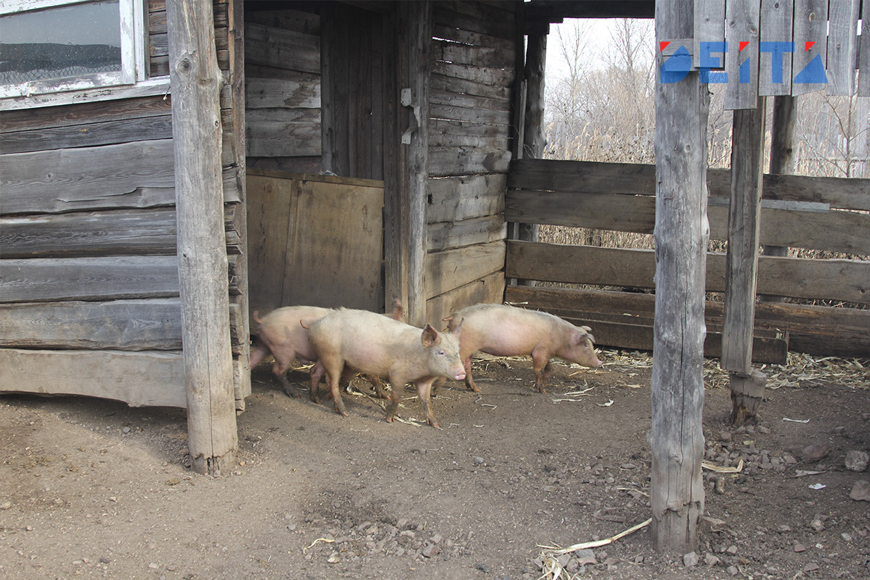 Резидент ТОР «Михайловский» почти готов к выпуску свинины