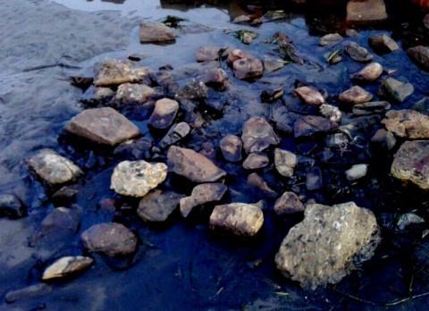 Непонятным веществом загрязнили озеро во Владивостоке
