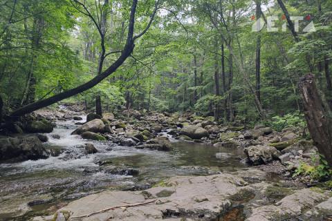 Трупы в лесу – страшное убийство расследуют в Приморье