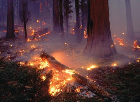 Названа причина катастрофических пожаров в Якутии