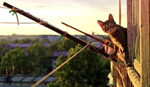 Штрафы до 5 тысяч рублей: что нельзя делать на собственном балконе