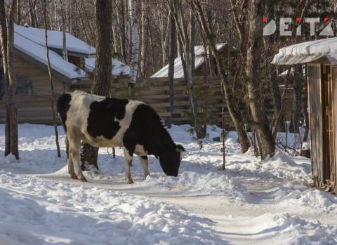 """Более трех тысяч """"захоронений"""" хранит у себя на участке житель Артема"""