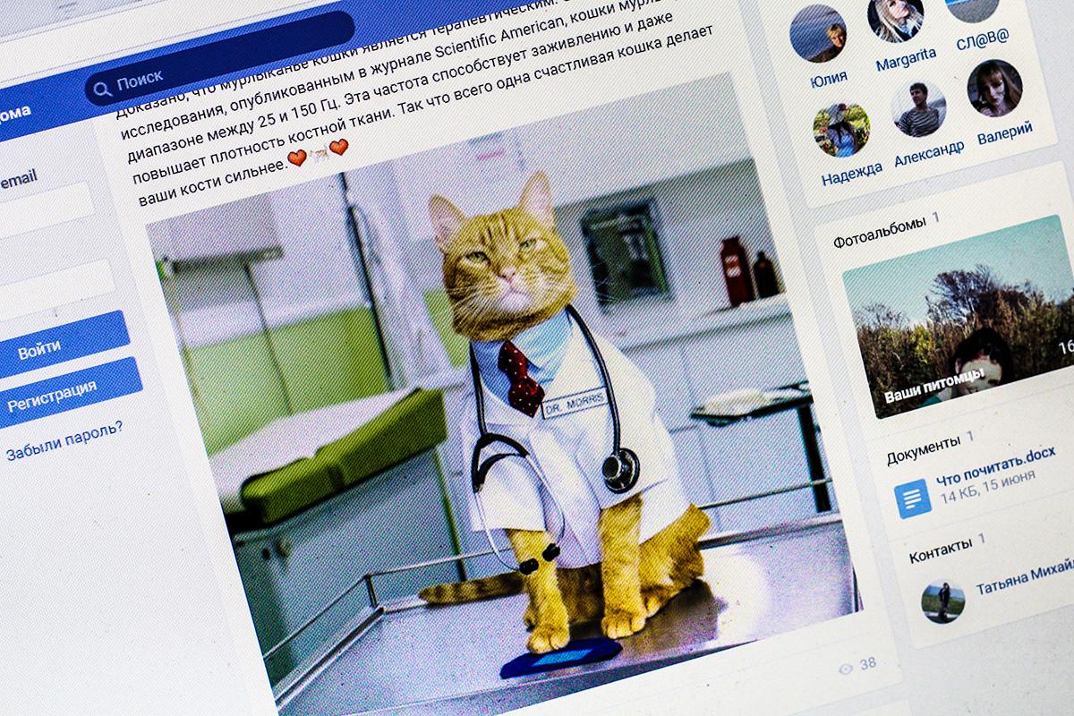 Усы, лапы и КОмпания: библиотекари идут в соцсети