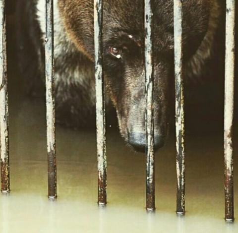 Зверей тонувшего зоопарка в Уссурийске решили затравить