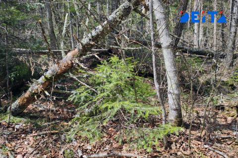 Российский лес стали всё чаще продавать в Китай за наличные