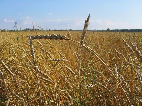 Россия захватывает мир не силой оружия, а поставками продовольствия