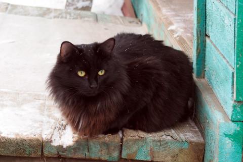 Черных котов могут принести в жертву