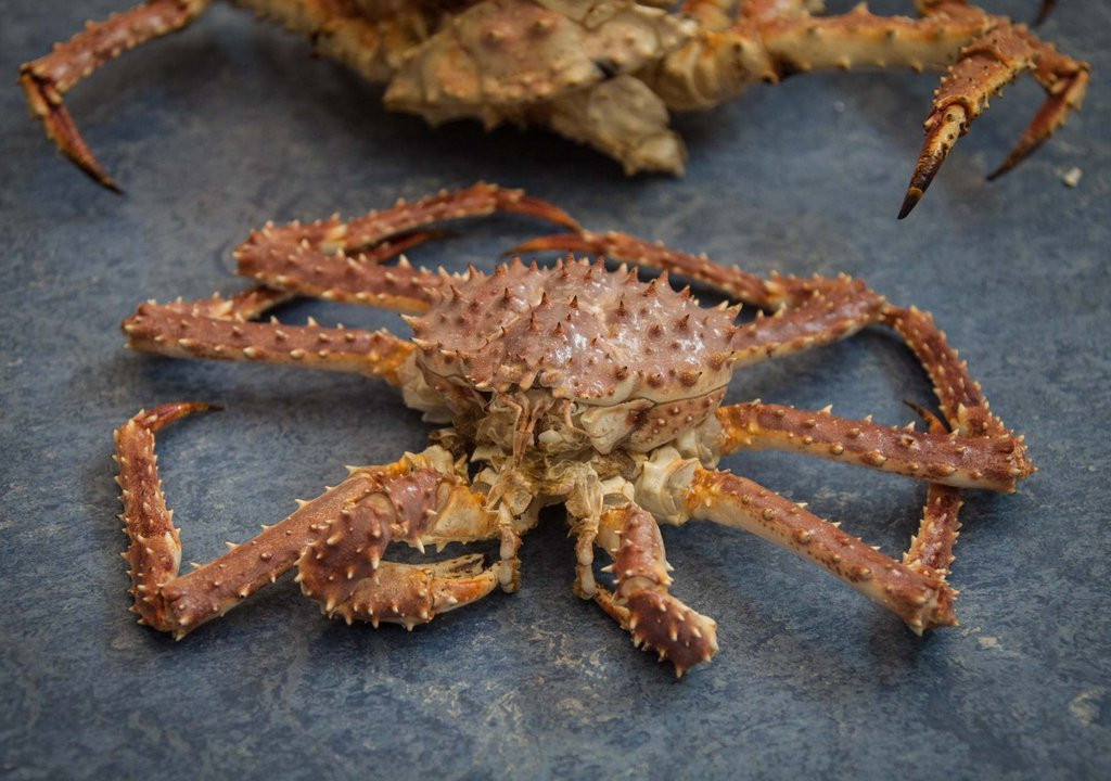 Рыбаки Приморья требуют перераспределения крабовых квот