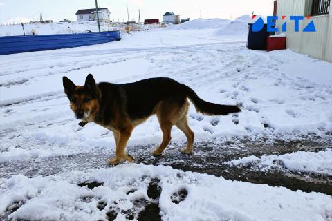 Суд наказал владельца напавшей на ребенка собаки