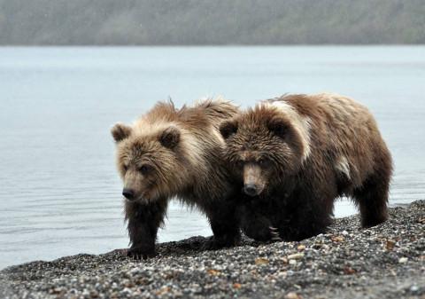 Медведь съел ребенка в заповеднике