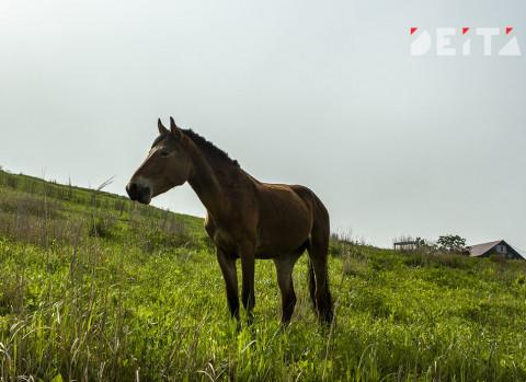 Породистых лошадей и верблюдов арестовали приставы у должника в Приморье