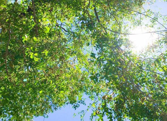 Тысячу растений высадят в парке Находки