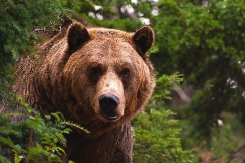 Пьяный медведь с балалайкой: Россия ищет новые скрепы
