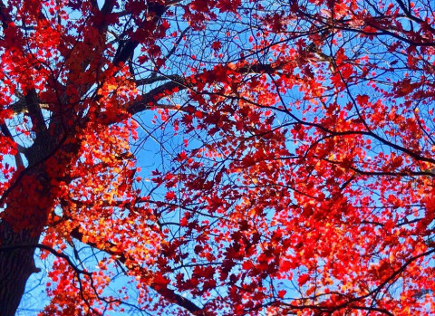 Последнее воскресенье октября порадует приморцев теплом
