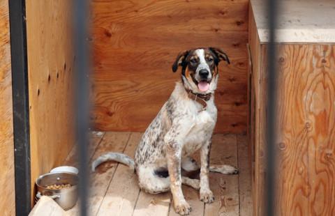 Проектировкой муниципального приюта для бездомных животных занялись во Владивостоке