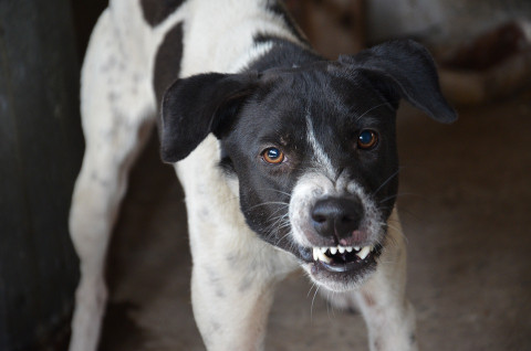 Два нападения собак на детей произошло в Артёме