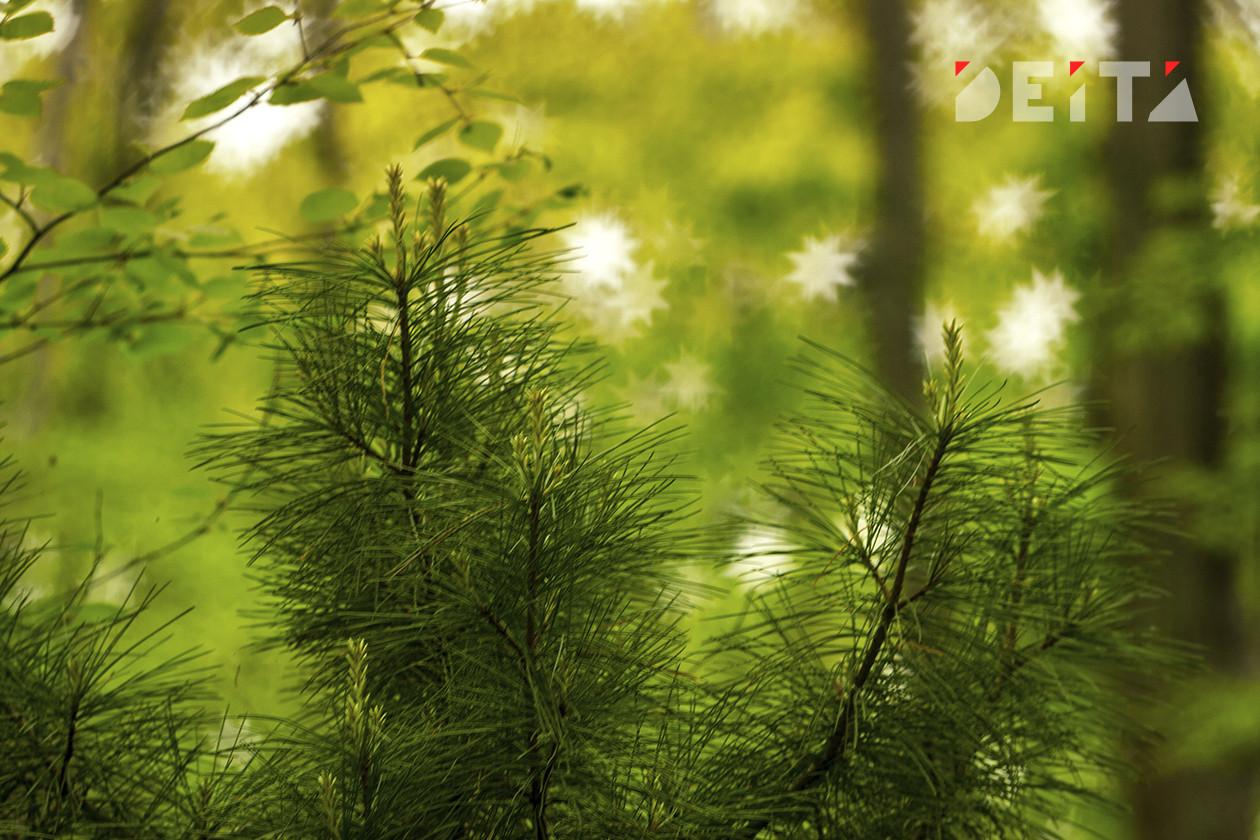 Вырубку леса на Байкале одобрил Совет Федерации