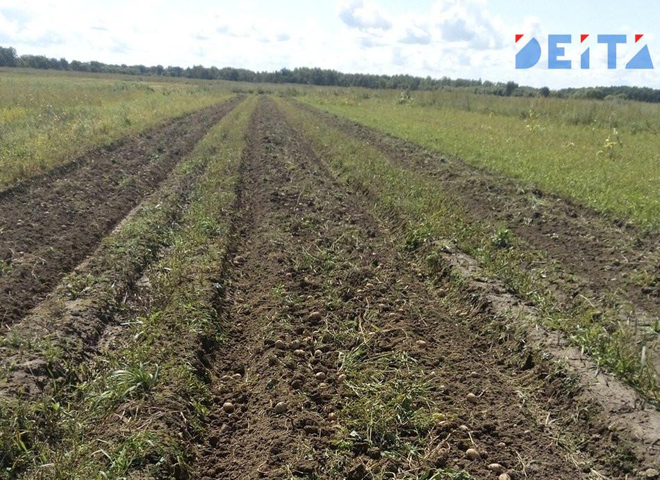 Сырьевой придаток: Китай просит Россию сеять больше сои