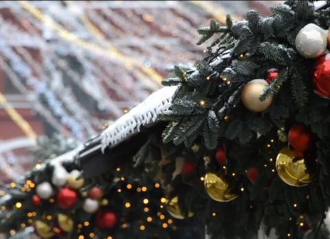 Новогодние ёлки уже устанавливают во Владивостоке