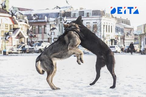 Проблему с приютом для собак не могут решить в Приморье