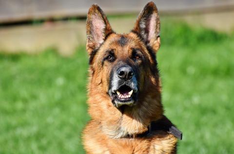 В Приморье проверяют информацию о собаке, напавшей на девочку