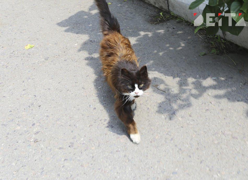 В Петербурге бездомный кот поднял вопросы этики